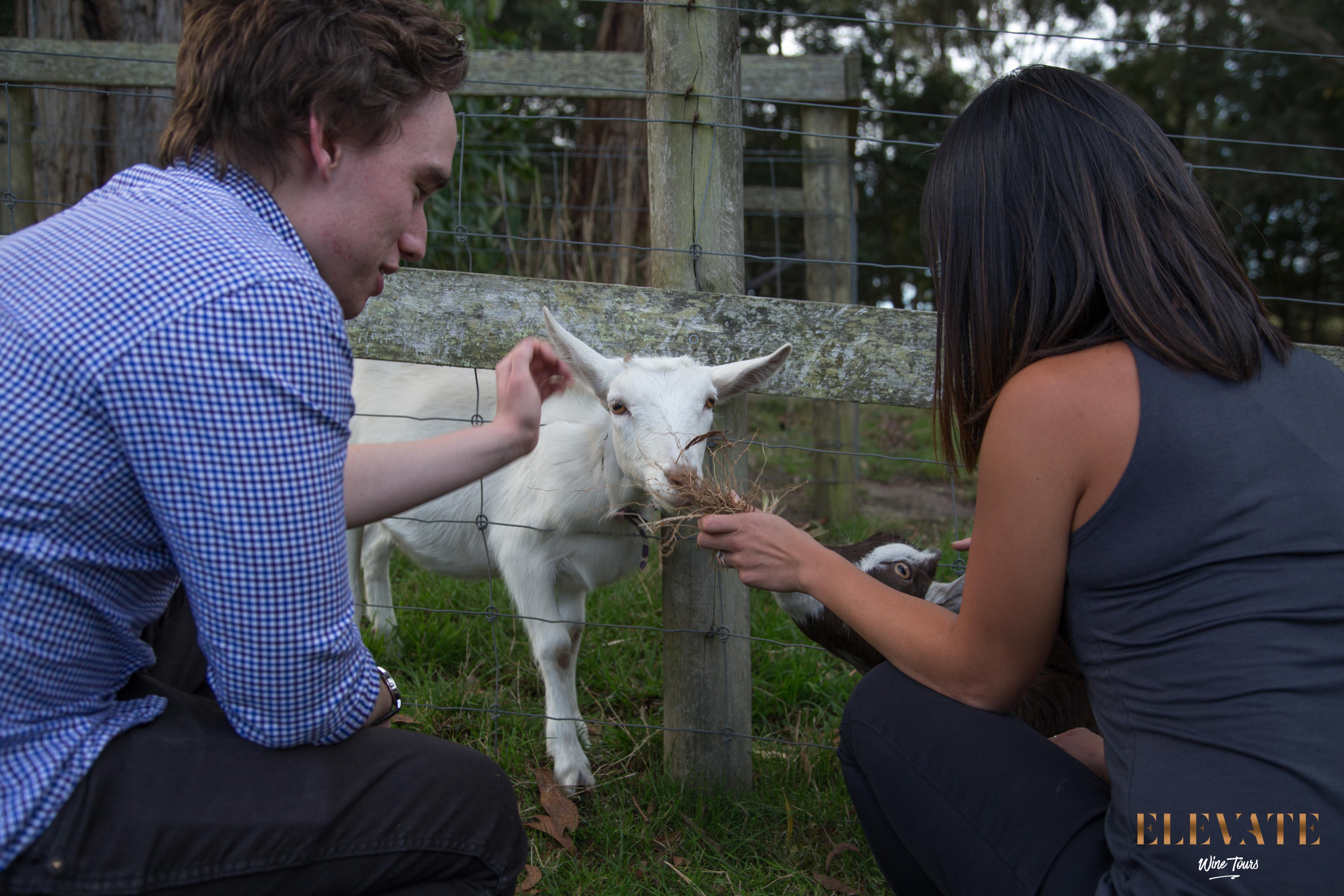 Man_lady_Main Ridge Dairy_patting goat