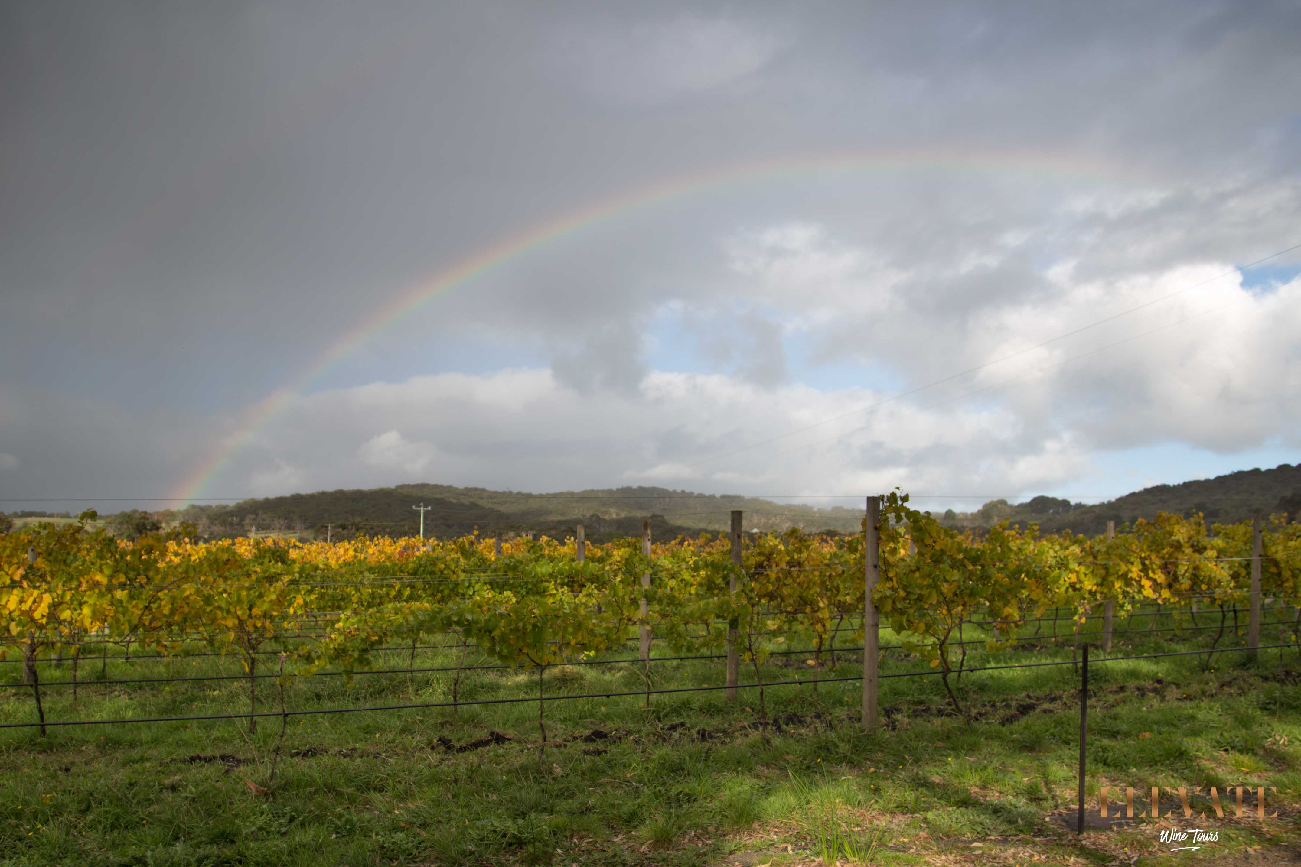 RAINBOW-MORNINGTON-PENINSULA-WINE-TOUR
