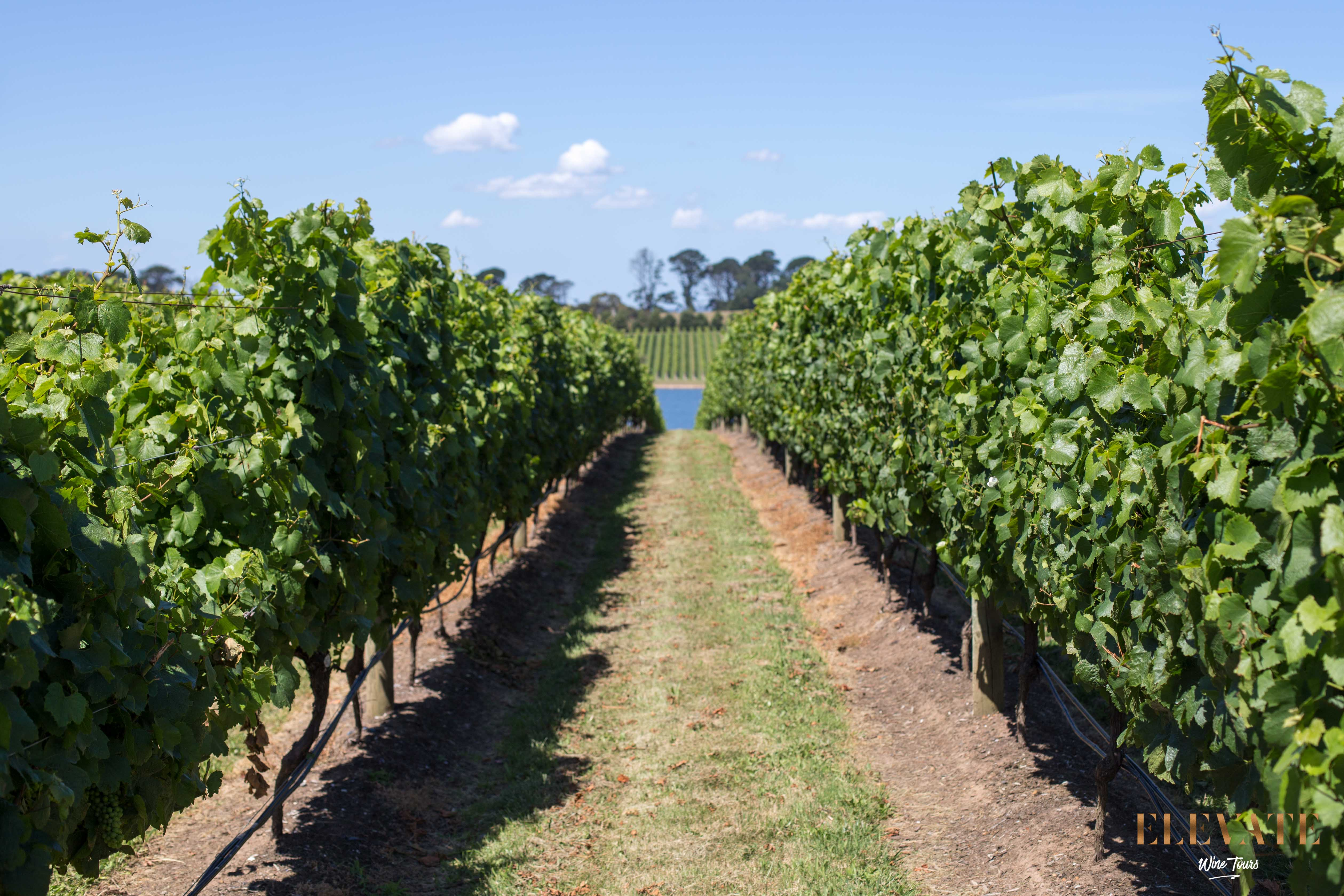 MORNINGTON-PENINSULA-WINE-TOUR-ELEVATE-10