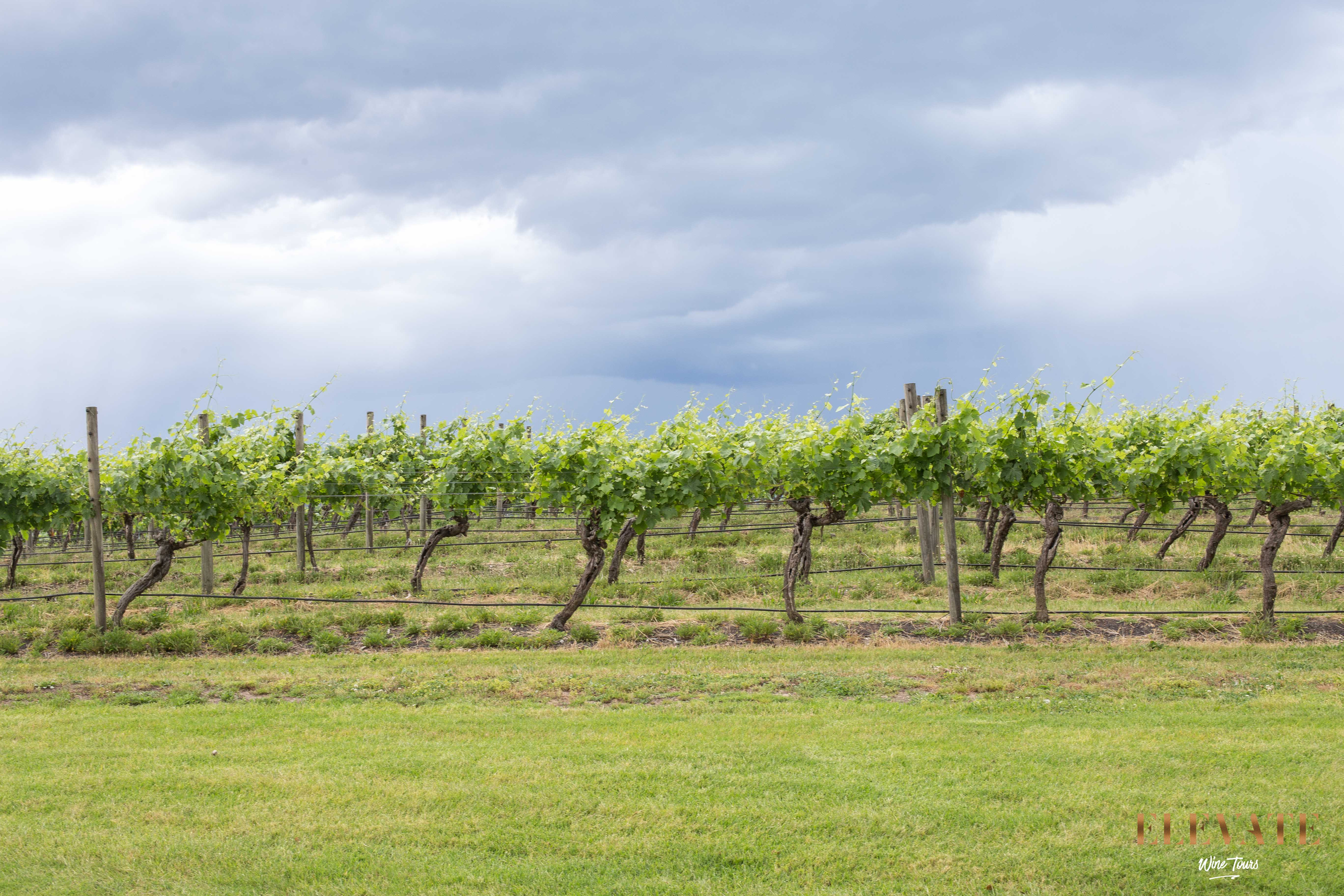 YARRA-VALLEY-WINE-TOUR-28