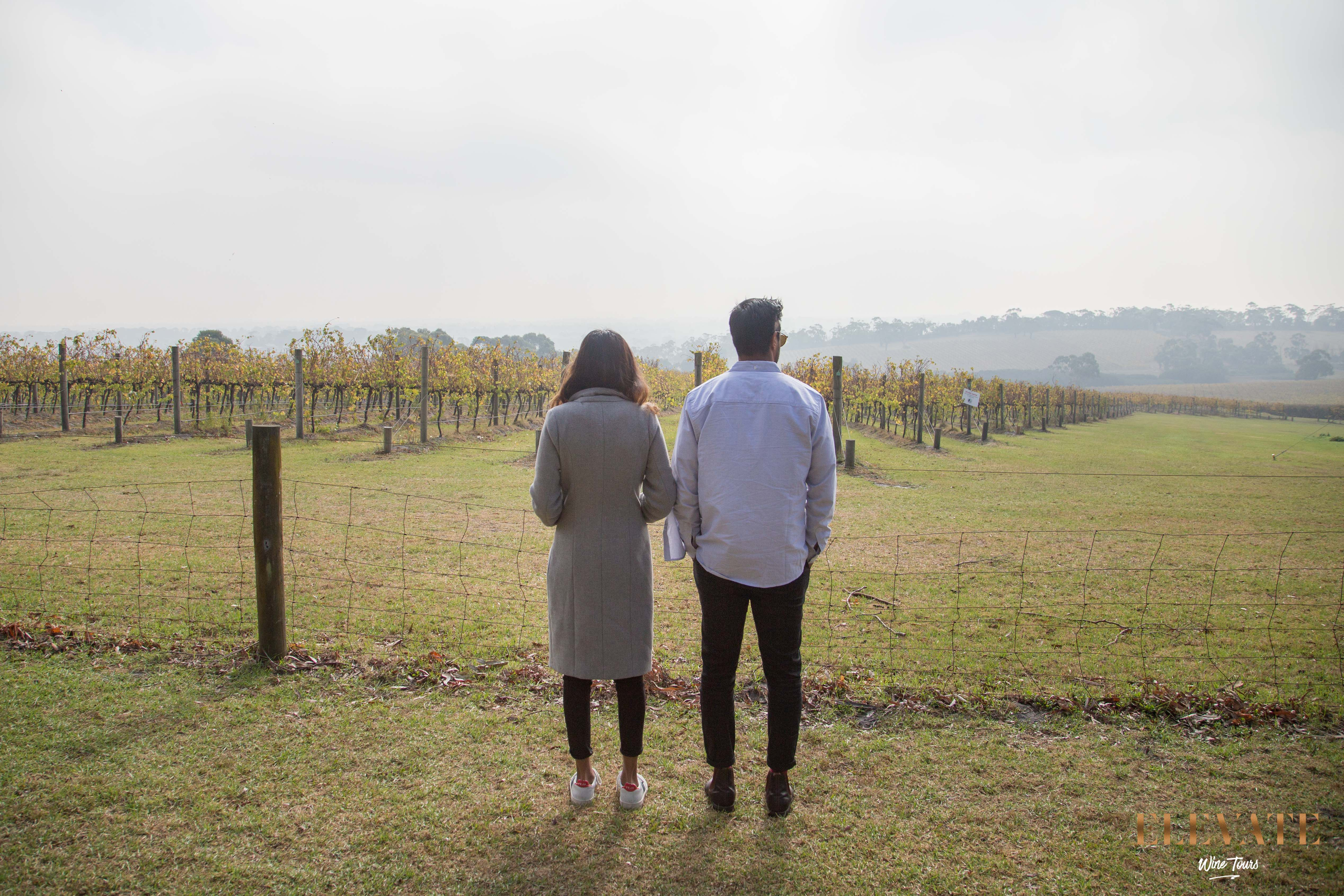 MORNINGTON-PENINSULA-WINERY-TOUR-4